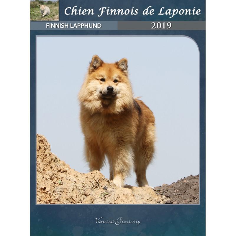 Calendrier Chien Finnois De Laponie 2019