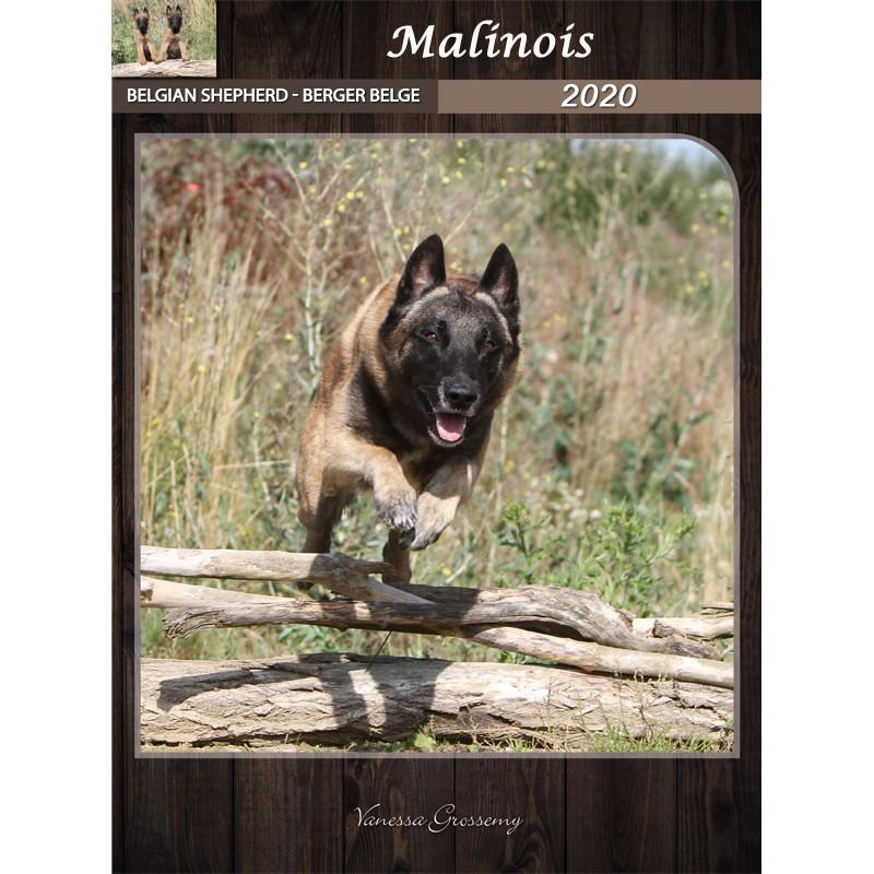 Calendar Belgian Shepherd Malinois 2020